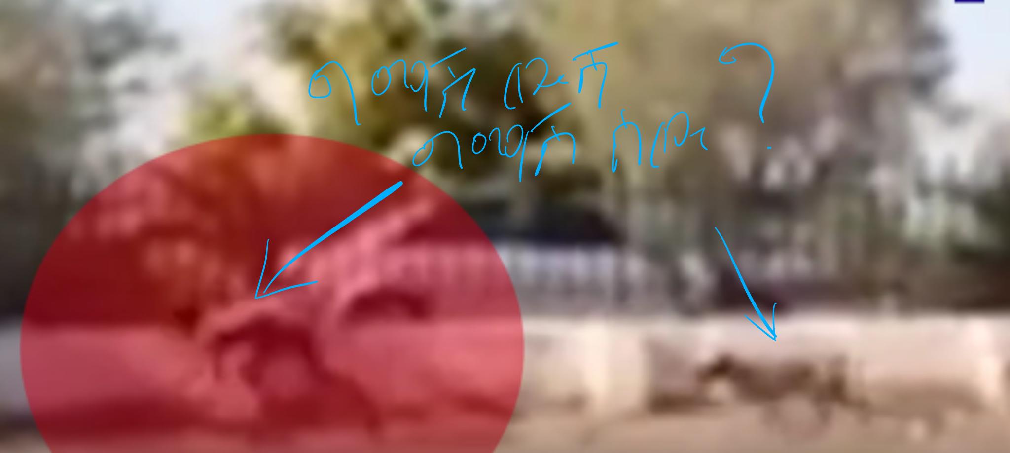 በደቡብ አፍሪካ ታየ የተባለው «ግማሽ-ሰው ግማሽ-ውሻ» እውነት ነው? | EthioFactCheck.com